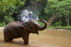 Elephant at Play – David O