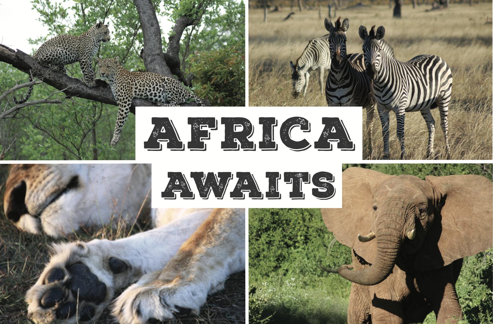 Africa Awaits Postcard front