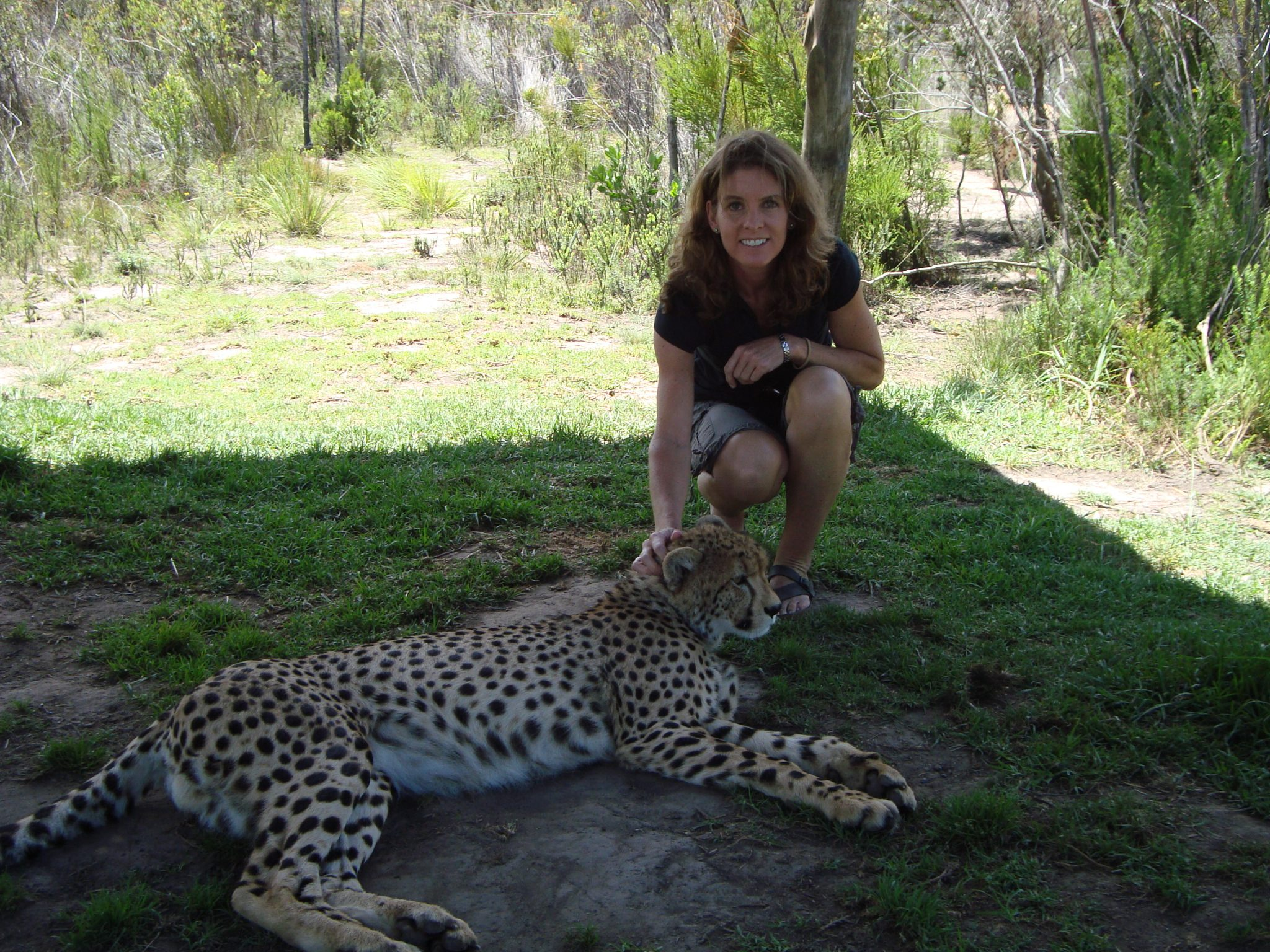 Sue Picken – Petting a Cheetah in SA